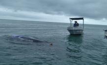 rescate-ballena-esmeraldas