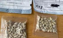 paquetes de semilla