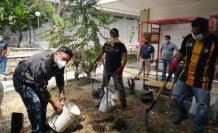 tala arboles universidad guayaquil