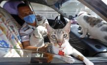 mascotas en el taxi