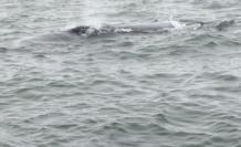 La ballena fue fotografiada por pescadores.