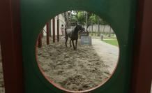 PISTA  CANINA EN EL A (32360671)