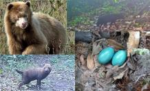 animales-salvajes-raros-video-foto-selva