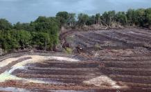 Así se visualiza la tala de 40 hectáreas de manglar en el Golfo de Guayaquil.