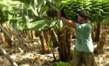 Bananco-productos-ecuador