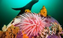 Lobo-marino-con-red-contaminacion-foto-mar-vida-marina-animales