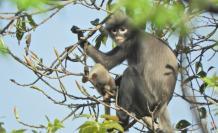 primate extincion