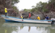 manglares blanca 19