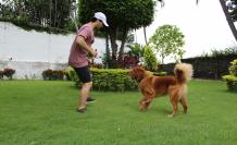 Mascota perro