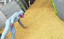 Imagen arroz