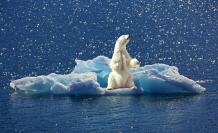 La fauna de ecosistemas fuertemente alterados es la más afectada.