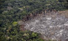 amazonia bosques
