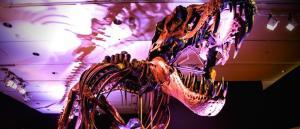 tiranosaurio-rex-stan-subasta-christies-dinosaurio-foto