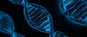 genes saltarines
