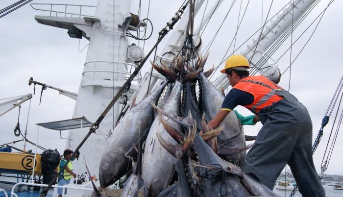 pesca atún malos precios