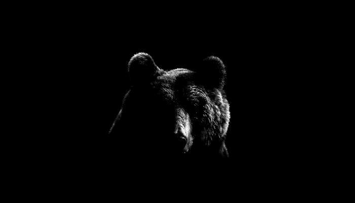 superpoderes animales ciencia osos