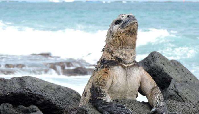 Islas-Galapagos-