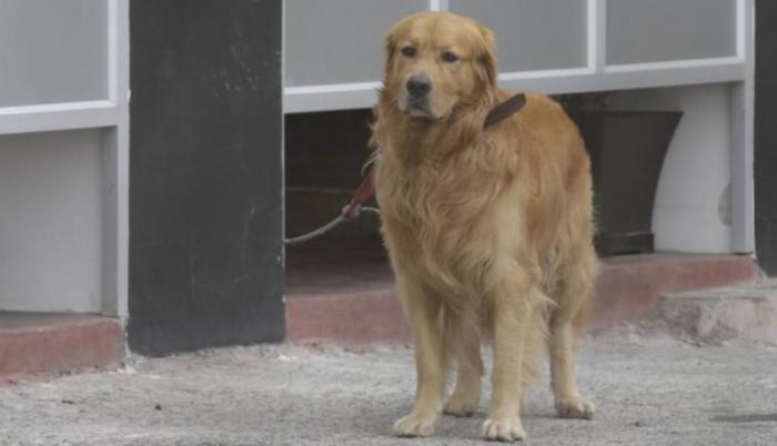 Coloso, el perro de Barcelona