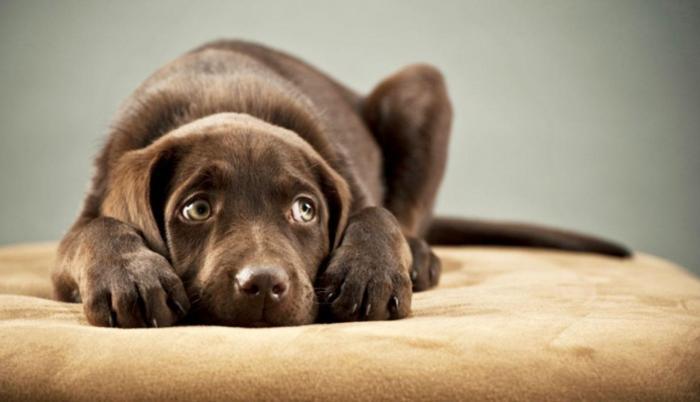 La organización Rescate Animal reportó 77 mascotas perdidas en fin de año.
