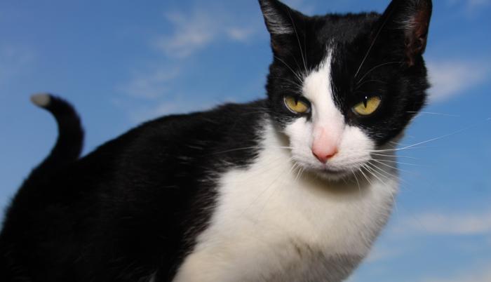 Gato negro video