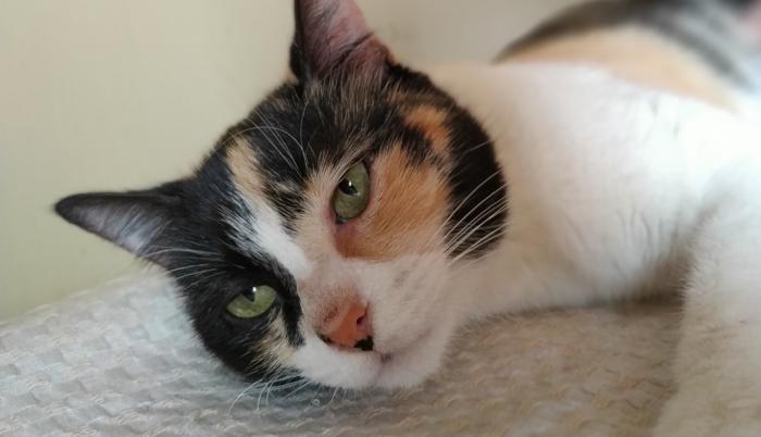 milagro gatita rescatada mascota animales