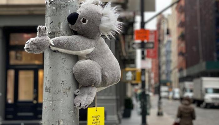 Koalas-of-NYC