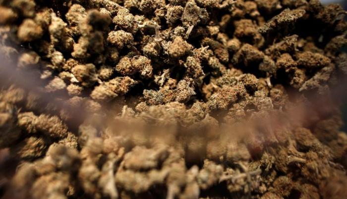 Muestra de cannabis en el 'Cannabisexpo 2020'.