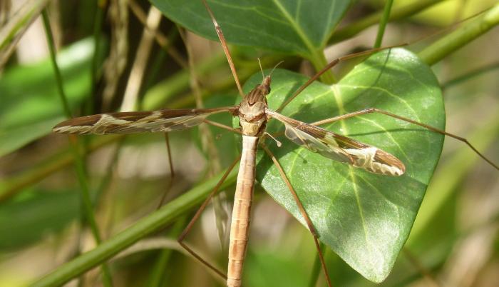 mosquito-1768829_1920 (1)