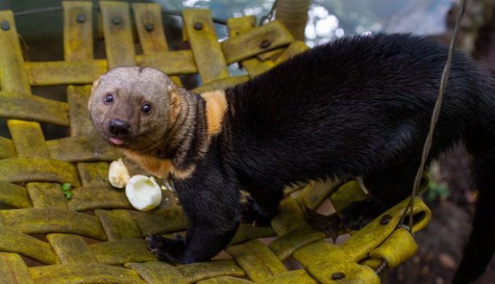 Zoológico de Quito, en crisis por el coronavirus. Foto: Twitter Zoológico de Quito. Marzo 2020.