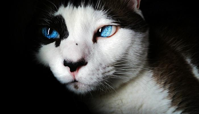 coronavirus-gatos-mascotas.jpg