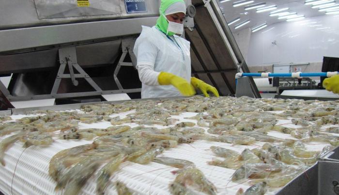 producción camarón