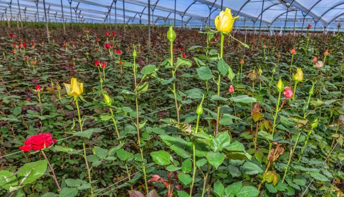 floricultura ecuador