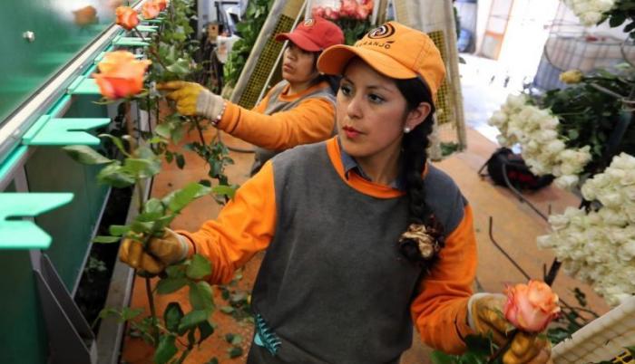 flores+producción+exportación