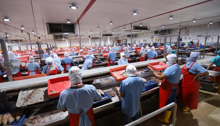 producción-atún-nirsa