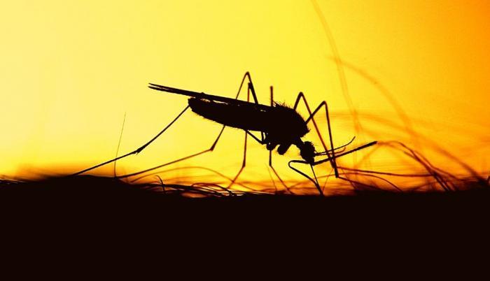 dengue-zika-fiebre-amarilla-mosquito-zancudo