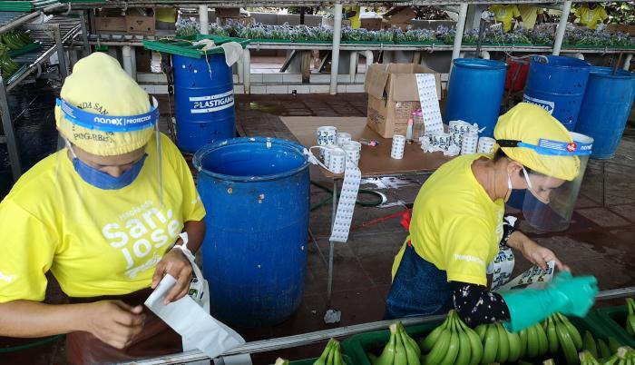 Empacadora bananera de Babahoro, hacienda San José.