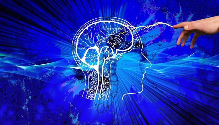 Cerebro en intensa actividad