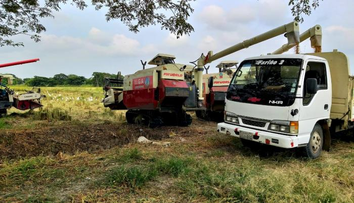 cultivo de arroz en Samborondón