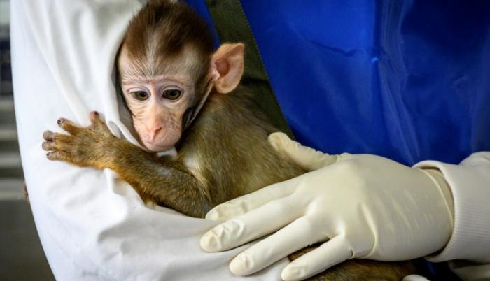 mono tailandia pruebas coronavirus