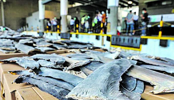 Aletas de tiburón incautadas en 2020