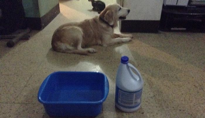 Mascotas-peligro-cloro-coronavirus