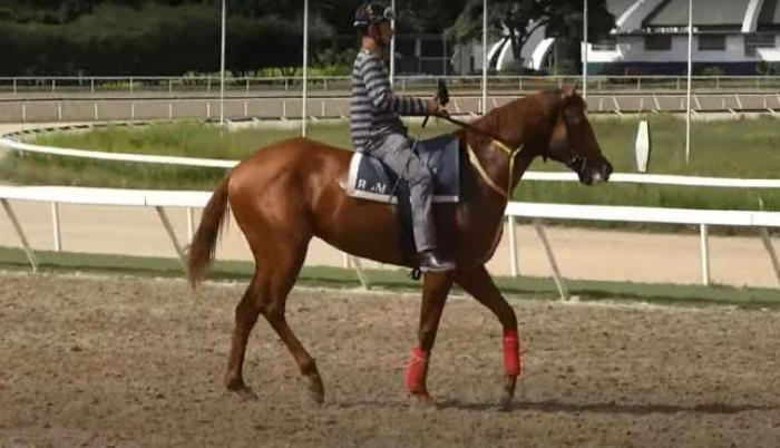 Ocean-bay-caballo-venezuela