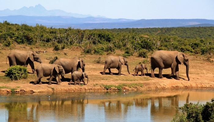 elefantes-africa-animales