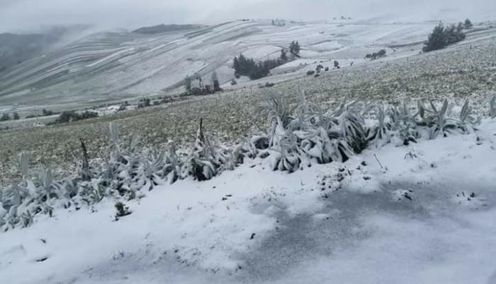 Nieve sierra