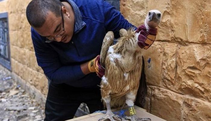 El pájaro, de color arena, se posó en Taez, una ciudad del sudoeste de Yemen.