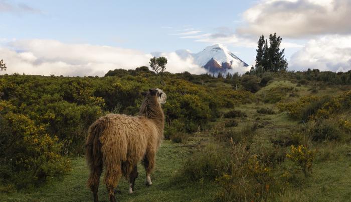 Paisaje del Ecuador