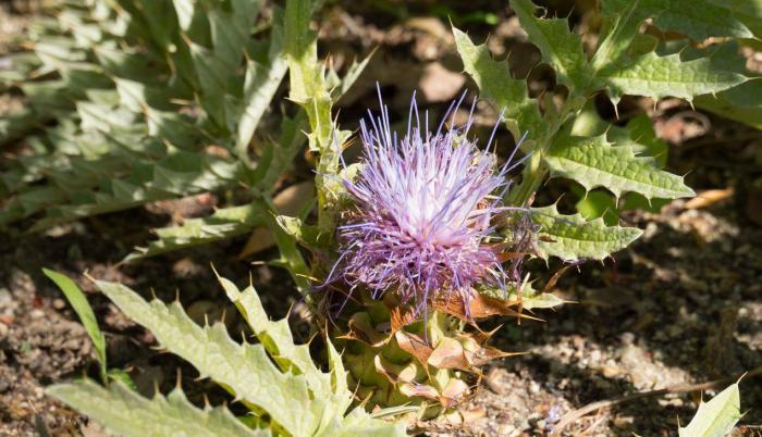 morra-flora-extincion