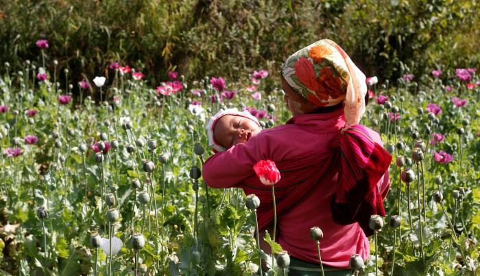 Zonas. En México la amapola se cultiva en el estado de Guerrero.