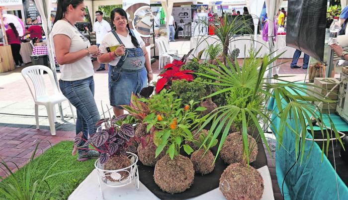 Kokedama. Es una técnica japonesa que permite tener plantas sin maceta, para ello las raíces descansan en una bola de musgo; el cual le permite recibir el agua y los nutrientes para vivir.