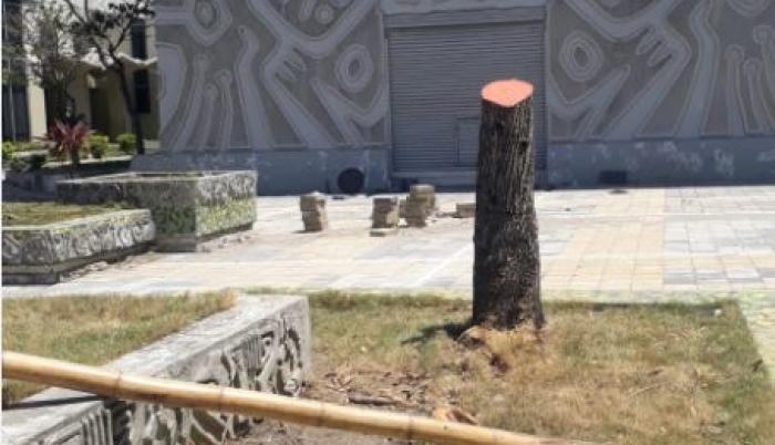 Así lucen los árboles de la Facultad de Arquitectura hoy.